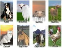 Veterinary Products -