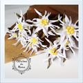 Edelweiss Artificiales -