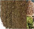 UNIEXPORT /// Corn cob, corn silage, DDGS, cashew husk for animal feeding -