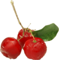 Acerola-Pulp, clarified, concentrated, aseptic or frozen, conventional or organic