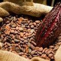 Cacao F2