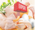 Chicken / Poultry -