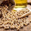 SOJA GMO GMO 等级2