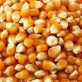 Grade A corn best price online