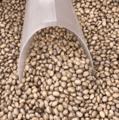 卡里奥卡豆