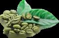 Granos de café verdes