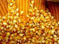 MILHO GMO - GMO CORN - ORIGIN BRAZIL -