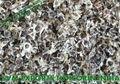 Moringa Conventional Seed Exporters India