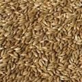 Premium Quality Canary Seed
