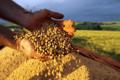 SOJA - GMO