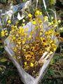 Flores de Santa Rita -
