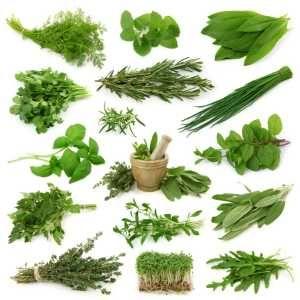 hierba kutki para la diabetes
