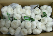 Thick Skin Carton White Garlic In Bulk