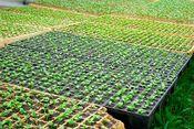 园艺用塑料托盘