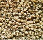 Soy Husks For Animal Feed - Oleoplan
