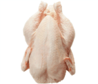 chicken, wholesale, supplier, seller, halal chicken