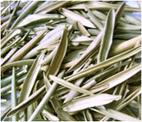 Olive Leaves - Eldeeb Trading Company