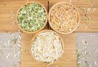 alho, wholesale, supplier, seller, alho picado, alho granulado, alho em pó