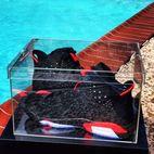Factory direct sale acrylic shoe box NEW - shenzhen yingyi best gifts co.,ltd