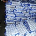 alho, wholesale, supplier, seller, Alho fresco e gengibre para venda
