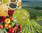 Mercado interior y externo