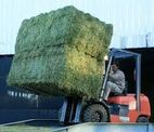 Feed grade Alfalfa Hay - MOLOBELA ML TRADING LTD