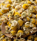 chamomile - GREENUP FOR IMPORT AND EXPORT