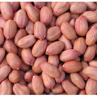 Best Red Skin Peanut / Groundnut Kernel - Cashcropsagro limited