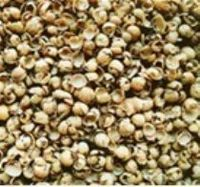 Soy Husks For Animal Feed -