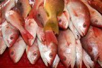 Frozen Fish -