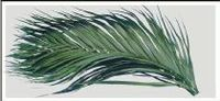 Areca Palm Pressed Dried Leaves -