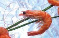 camarón silvestre -