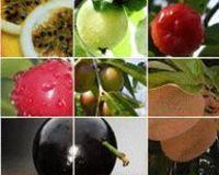Extratos de ervas - Variedade de plantas medicinais do Brasil! -