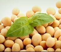 Exportação de soja -