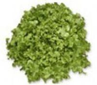 生菜含羞草 -