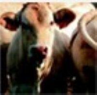 动物营养 -