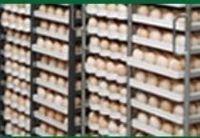 Los huevos fértiles -