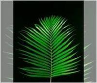 Cutting Fresh Tropical Foliage -