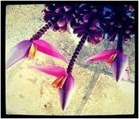 Flores Tropicais Frescas -