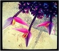 Fresh Tropical Flowers -