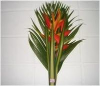 Fresh Flowers Bouquets From Brazil -