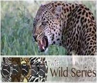 Watch Series Twist-Wild -