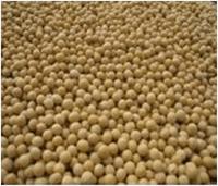 Soybeans In Grain -