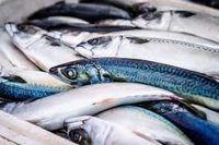 FROZEN MACKEREL, FROZEN SALMON , DRY STOCK FISH, FROZEN CHICKEN , PORK , MEAT , RIBBON FISH -