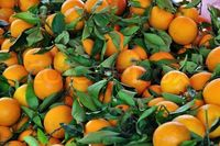 Sweet Delicious Naval Oranges 2018 High Quality -