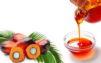 粗棕榈油 (棕榈油) -