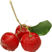 Acerola-Pulp, clarified, concentrated, aseptic or frozen, conventional or organic -