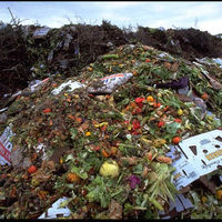 Agricultural Waste -