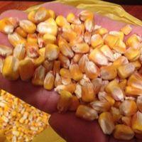 干黄和白玉米 -