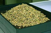 Green Coffee -